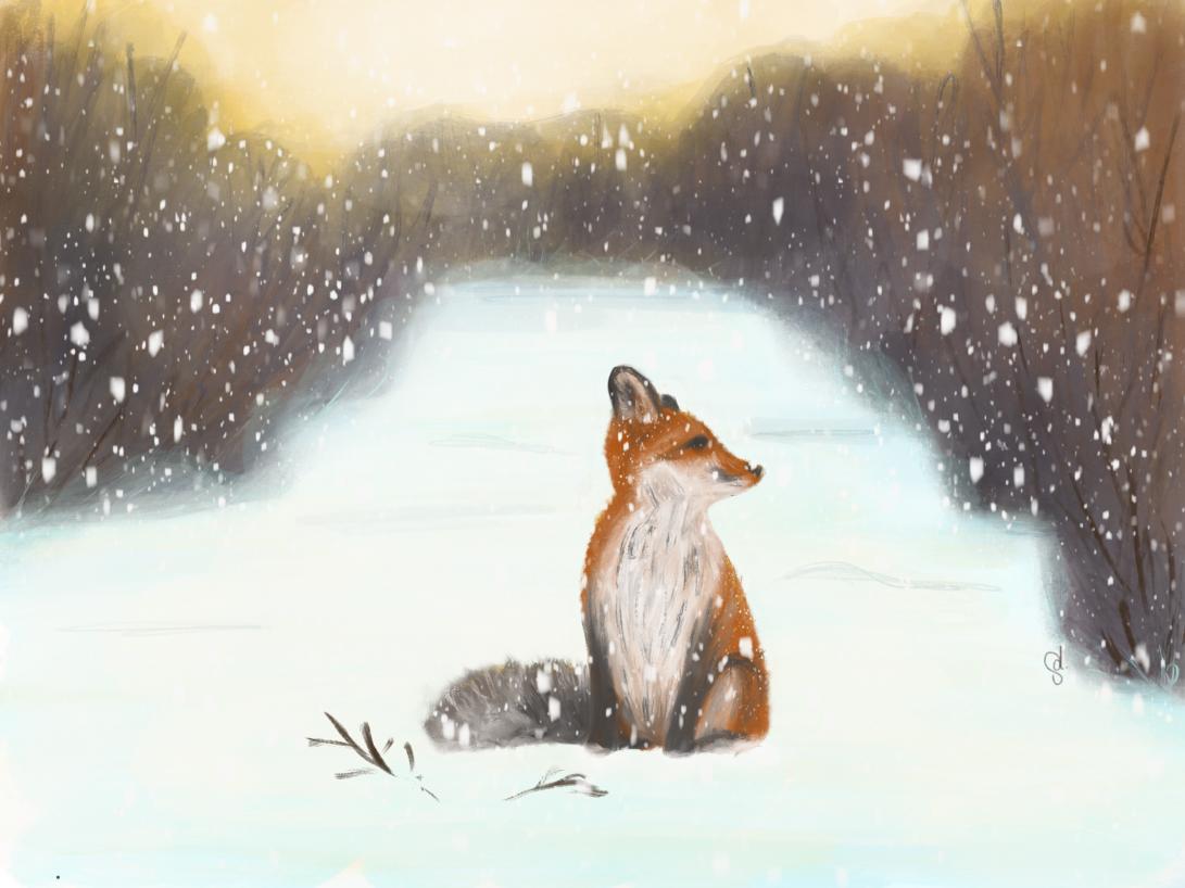 Renard d'hiver